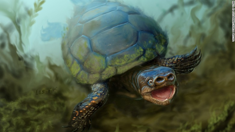 New species of extinct pig-snouted turtle discovered