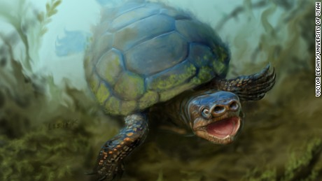 An artist's depiction of the turtle Arvinachelys goldeni as it would have appeared in life 76 milion years ago in southern Utah.