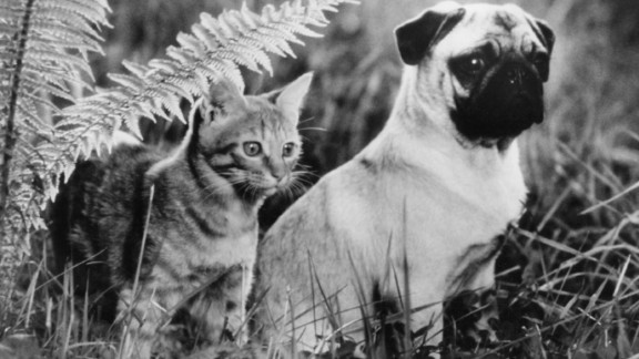 """<strong>""""The Adventures of Milo and Otis""""</strong>: A cat and a dog who are best friends embark on a spirited trek. <strong>(Amazon Prime) </strong>"""