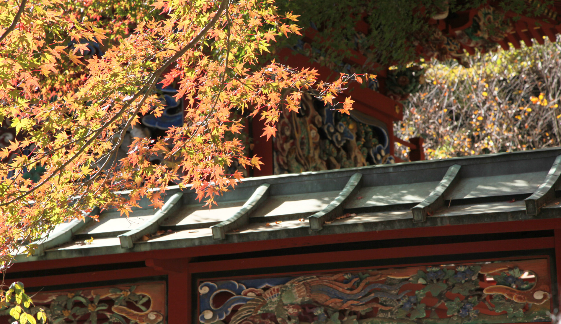 Best places to see autumn leaves in Tokyo | CNN Travel