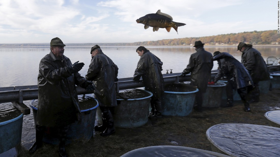 A fisherman throws a fish during the traditional carp haul in Smrzov, Czech Republic, on Monday, November 2.