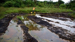 Nigerian Inquiry into Oil spills