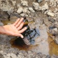niger delta oil contam land