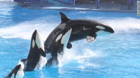 seaworld no more killer whale shows blackfish co-writer intv walker cnn today_00033325