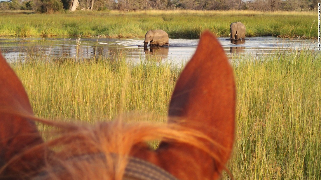 From the vantage point of the saddle, riders can expect to see elephants, lions, buffalo and antelope.