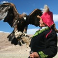 Mongolia - JW Eagle w hunter wings out