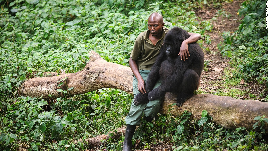 Despite the dangers posed to the rangers at Virunga National Park, many are willing to put their lives at risk.