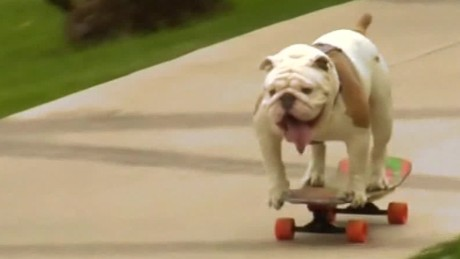 skateboarding.bulldog.breaks.record.zian.asher.pkg_00002628