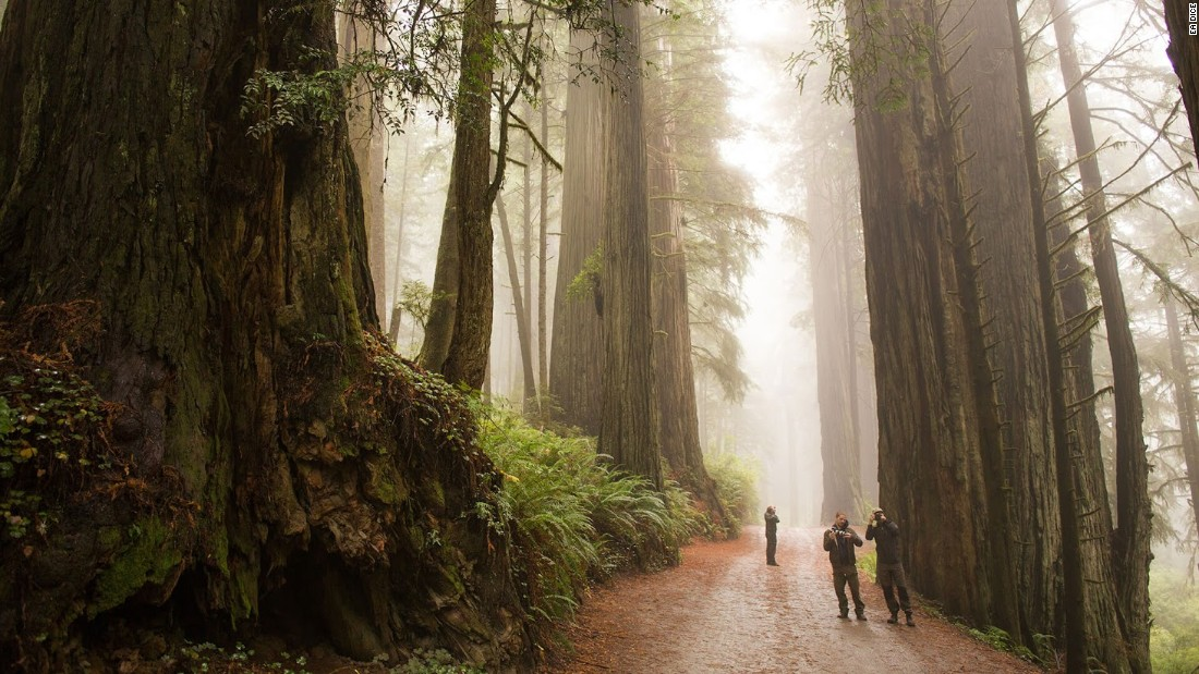 DICE team members visited Muir Woods in California to re-create the forest moon of Endor.