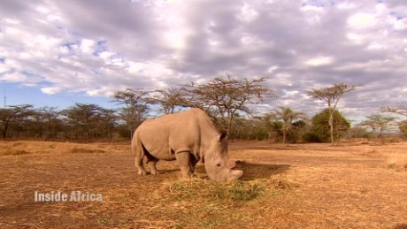 Meet the last male northern white rhino