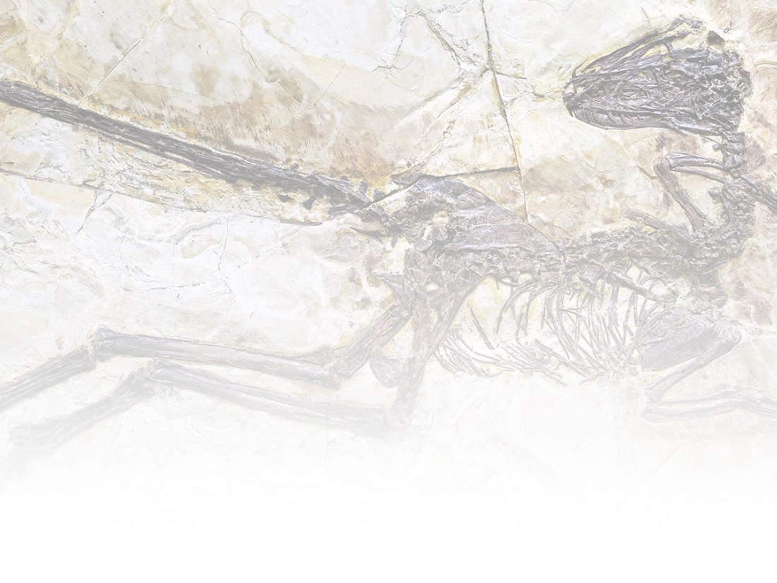 China's golden age of paleontology - CNN