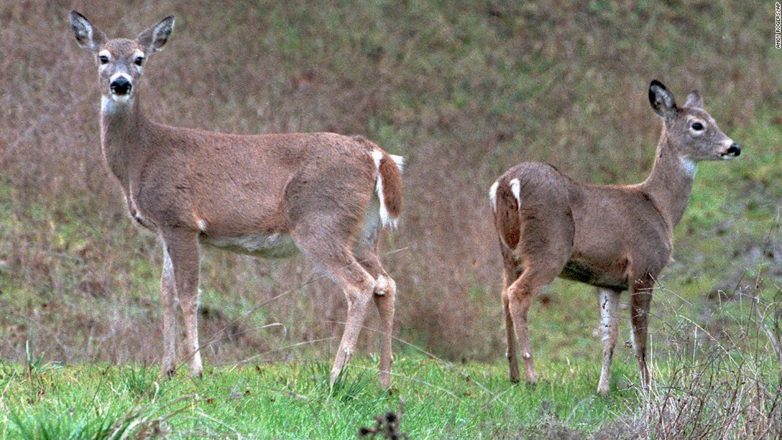<strong>Columbian white-tailed deer</strong>, native to Oregon and Washington, were officially listed as endangered in 1967. They were removed from the list in 2003 after the population grew from less than 2,000 to more than 5,500.