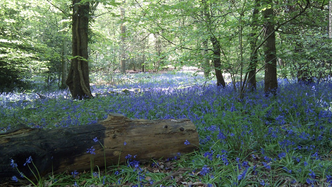 "<strong>Naboo (Whippendell Woods, near Watford, UK): </strong>The tranquil glades of <a href=""http://cassioburypark.info/whippendell-wood/"" target=""_blank"">Whippendell Woods</a>, just outside London, are the setting for one of the most controversial scenes in ""Star Wars."" It's where the widely lambasted character of Jar Jar Binks makes his debut."