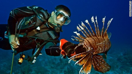 REEF lionfish derby in Florida