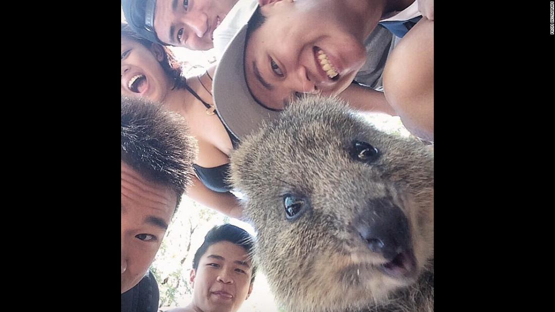 "College student Joshua Chuah and his friends take a selfie with a quokka Sunday, March 1, on Australia's Rottnest Island. ""Made a new furry friend on the island today,"" <a href=""https://instagram.com/p/zr4TF9rndq/?modal=true"" target=""_blank"">Chuah said on Instagram.</a> Taking selfies with quokkas became something of <a href=""http://www.neatorama.com/2015/03/02/The-Quokka-is-the-Latest-Selfie-Quirk/"" target=""_blank"">a trend on social media.</a>"
