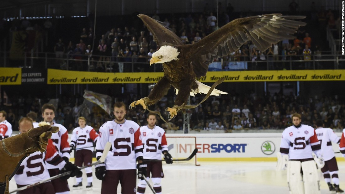 The eagle mascot of Swiss hockey team Geneve-Servette flies over the players of Sparta Prague before a Champions League hockey game Saturday, August 22, in Geneva, Switzerland.