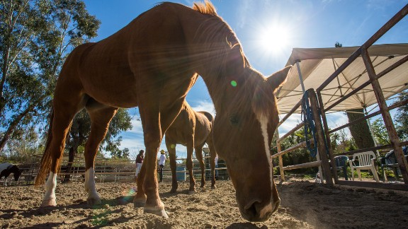 Most horses at the Ortega Center have been donated -- many are old show horses.