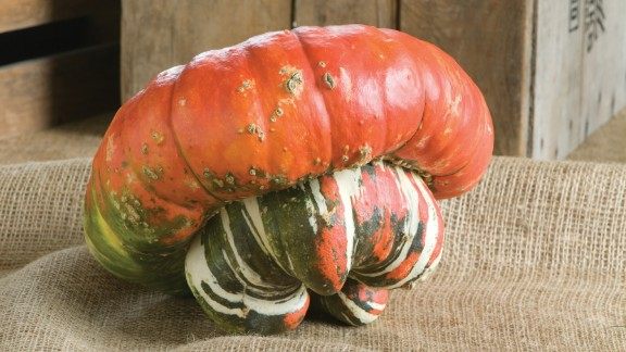The turks turban is one of many modern squashes that have our ancient ancestors to thank for its very existence.