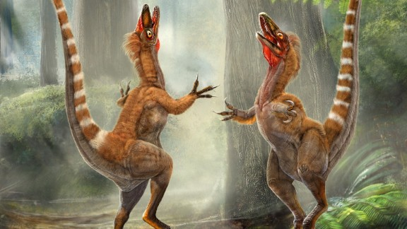 Revealed in 1996, this was the very first feathered fossil to be unearthed and offered the first evidence that birds are descended from dinosaurs.
