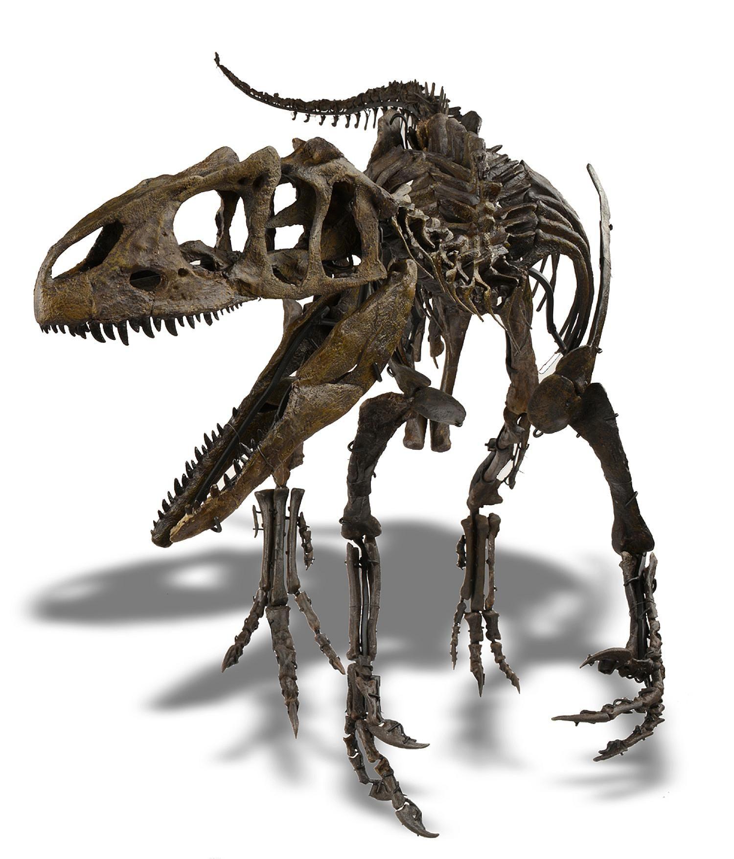 Mystery Dinosaur Skeleton Sells For 24 Million Cnn Style