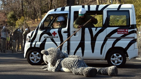 February 10: An employee from the Tama Zoo in Tokyo pretends to check a tranquilizer's effectiveness on an employee wearing a snow leopard suit. The annual drill practiced what to do in the event of an animal escape.