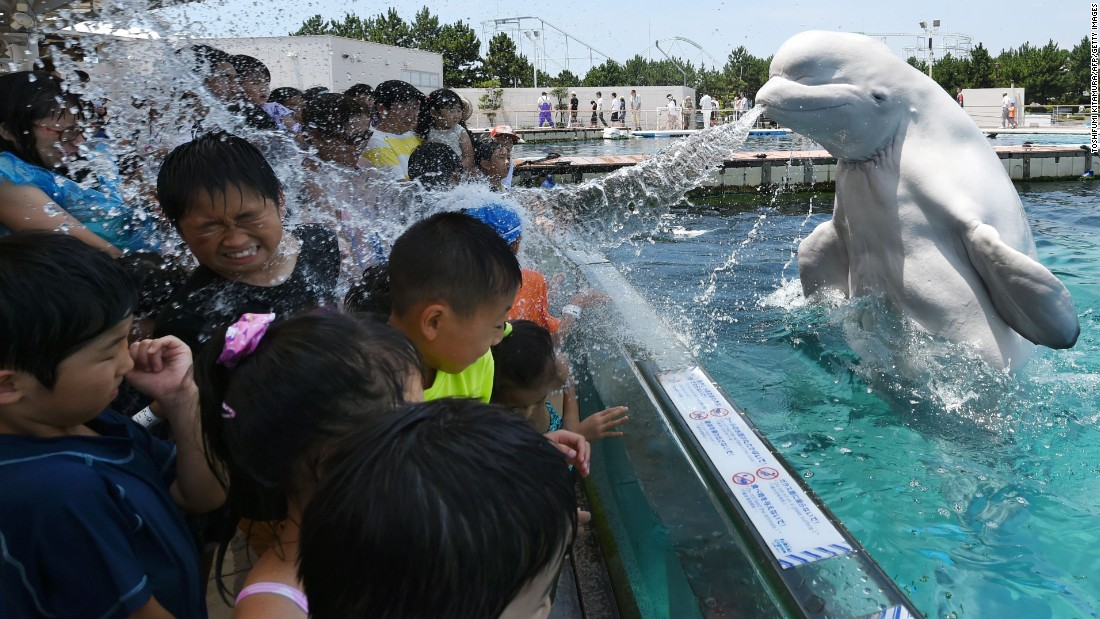 <strong>July 20:</strong> A beluga whale sprays water toward young visitors at Hakkeijima Sea Paradise, an amusement park in Yokohama, Japan.