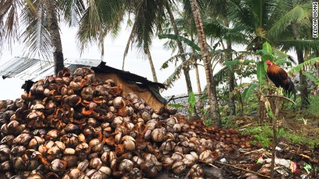 Typhoon Haiyan in late 2013 hit the coconut industry hard, destroying an estimated 44 million trees.
