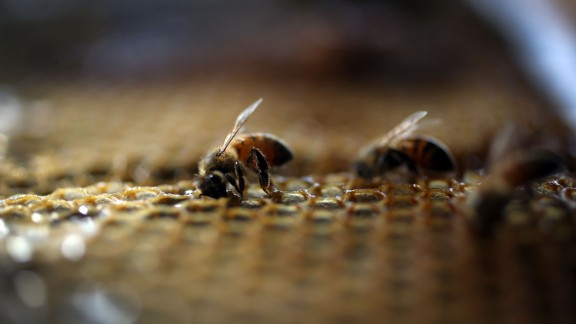 HOMESTEAD, FL - MAY 19:  Honeybees are seen at the J & P Apiary and Gentzel