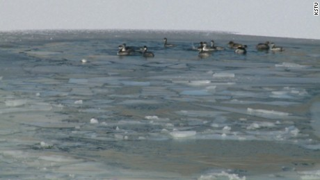 woman falls through ice rescue dogs pkg_00012911