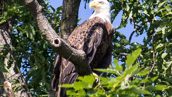 Populations of many bird species were severely depleted during the mid-20th century in the U.S. due to widespread use of the pesticide DDT. Only after it was banned in the early 1970s did the likes of bald eagles start to recover.