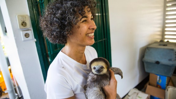 In Suriname, Monique Pool has been a passionate sloth protector since 2005.  She also takes in anteaters, armadillos and porcupines.  Her volunteer group has rescued, rehabilitated and released more than 600 animals.