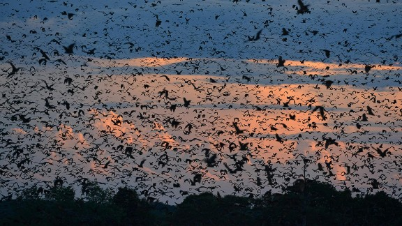 Yes, five million bats can look beautiful. They cluster together in one tiny corner of Zambia's Kasanka National Park every November.