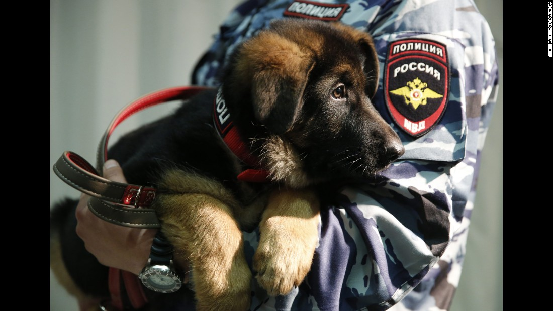 "A Russian police officer holds a German shepherd puppy named Dobrynya during a presentation ceremony at the French Embassy in Moscow on Monday, December 7. France <a href=""http://www.cnn.com/2015/12/08/europe/france-russia-police-dog/"" target=""_blank"">accepted the puppy</a> following the death of a police dog named Diesel. Diesel was killed during a terror raid last month in the Paris suburb of Saint-Denis. Dobrynya is named after a folklore hero, and it is intended as a ""symbol of the unity of our nations in implacable fight against terrorism,"" Russian Deputy Interior Minister Igor Zubov said during the ceremony."