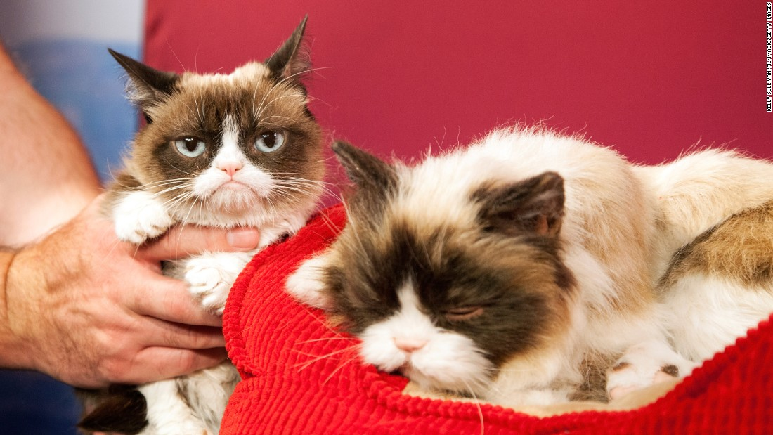 "Internet sensation ""Grumpy Cat,"" left, looks unimpressed with her animatronic counterpart Tuesday, December 8, at Madame Tussauds in San Francisco."