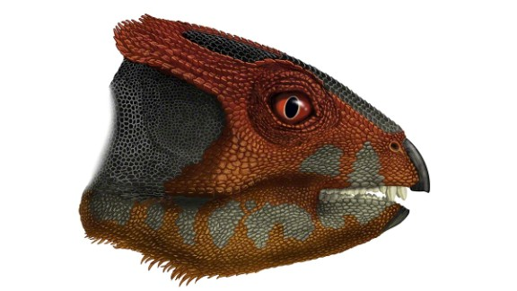 The discovery of the hualianceratops, from the same family of dinosaurs as the triceratops, was announced December 9 2015.  Its fossils were discovered in the Gobi Desert, western China.