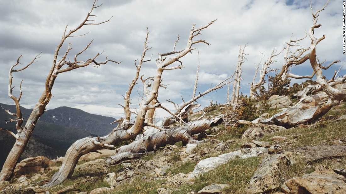 Trees on the Continental Divide Trail are pictured at Rocky Mountain National Park in Colorado.