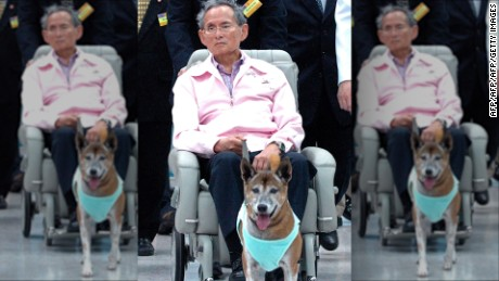 "(FILES) In this file photo taken late on February, 27, 2010, Thai King Bhumibol Adulyadej holds the leash of his dog while sitting in a wheelchair at a hospital in Bangkok. A Thai faces prison after being charged with lese majeste for insulting the king's dog, his lawyer said on December 15, 2015, in an escalation of the already draconian royal defamation law. Thanakorn Siripaiboon, 27, has been charged by police with lese majeste for a ""satirical"" Facebook post about the king and his dog, lawyer Pawinee Chumsri told AFP.  AFP PHOTO / FILESAFP/AFP/Getty Images"