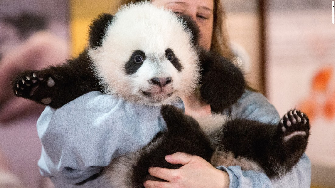 "Animal keeper Nicole MacCorkle holds Bei Bei, <a href=""http://www.cnn.com/2015/12/17/politics/bei-bei-panda-national-zoo/"" target=""_blank"">the newest panda cub</a> at the National Zoo in Washington, on Monday, December 14. Bei Bei will make his public debut on January 16."