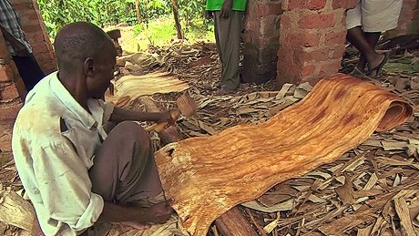 Producing bark cloth is a labour intensive process