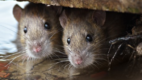Scientists create new tool to fight spread of the plague