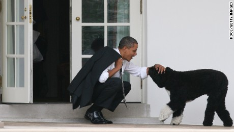 WASHINGTON - MARCH 15:  U.S. President Barack Obama pets his dog Bo outside the Oval Office of the White House March 15, 2012 in Washington, DC. Obama spoke today at Prince Georges Community College about energy.  (Photo by Martin H. Simon-Pool/Getty Images)