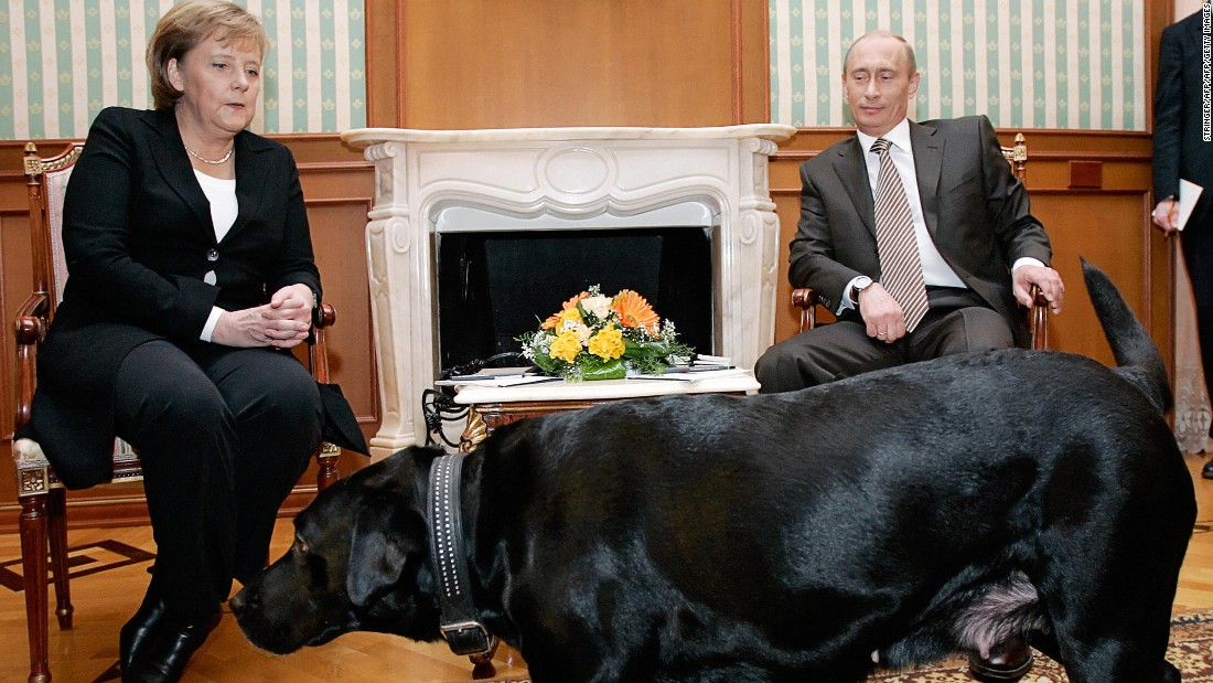 Putin I Didn T Mean To Scare Angela Merkel With Dog Cnn