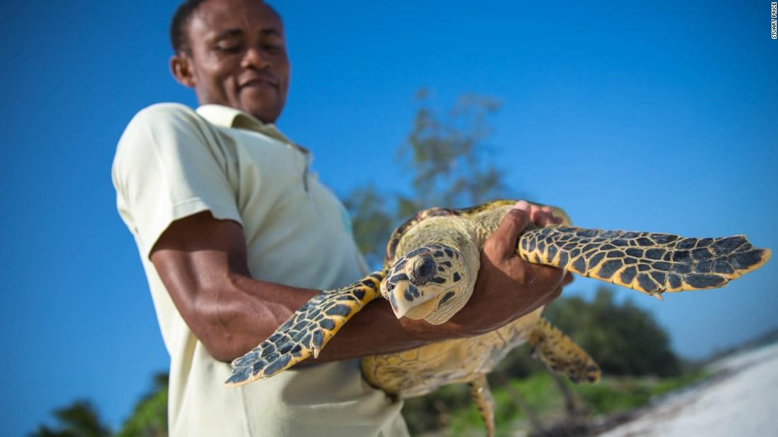 #KenyaLive is also streaming the release of a rehabilitated sea turtle back into the Indian Ocean at 2pm on January 17.