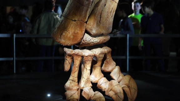 The dinosaur was discovered in the Patagonian desert region of Argentina in 2014.