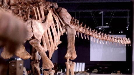 cnnee pkg vega largest dinosaur ever found_00013612
