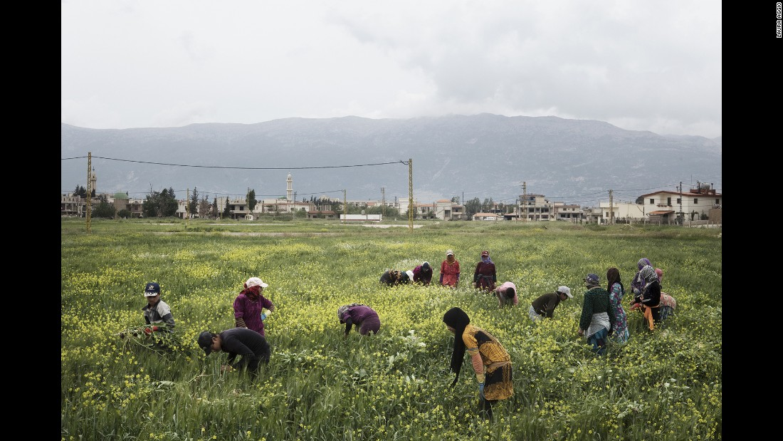 Young refugees work in the Bekaa Valley of Lebanon.
