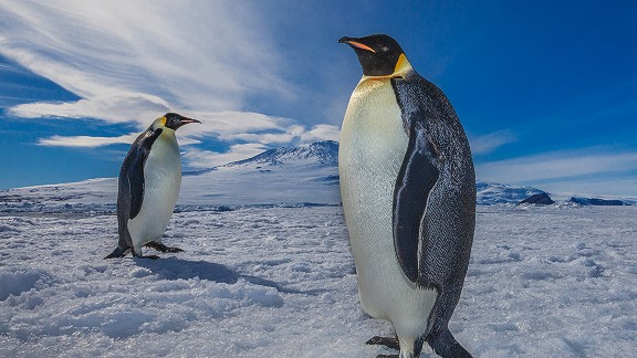 Around the globe, penguins are at risk of extinction due to overfishing and man-made changes to their breeding grounds.  Ben Adkison is a freelance photographer based in Montana. His photos from remote corners of the world can be found on Facebook and his website.