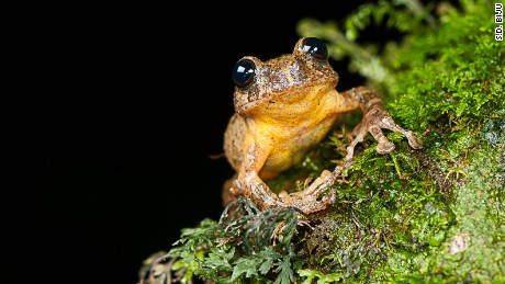Century-old tree frog rediscovered in India