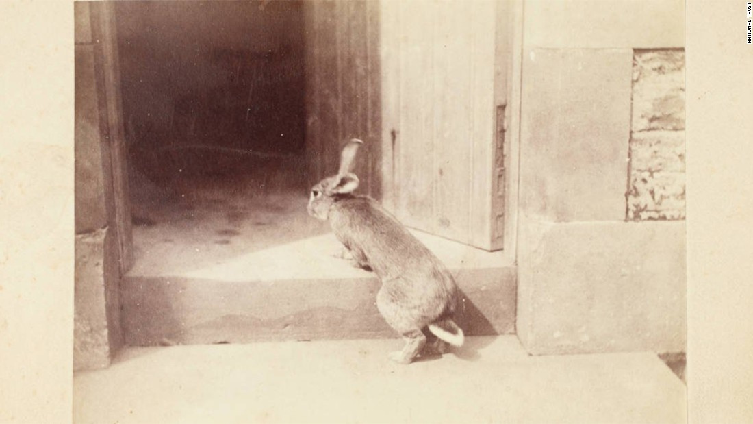 "Potter owned several rabbits during her life. This one, named Benjamin, is thought to have inspired her character Benjamin Bunny, who appeared in her Peter Rabbit books and later in ""The Tale of Benjamin Bunny."""