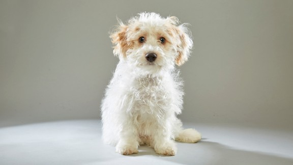 """Maltese Toby never leaves home without sunscreen, according to Animal Planet. Toby was recruited from the <a href=""""http://www.nevadaspca.org/"""" target=""""_blank"""" target=""""_blank"""">Nevada SPCA</a>."""